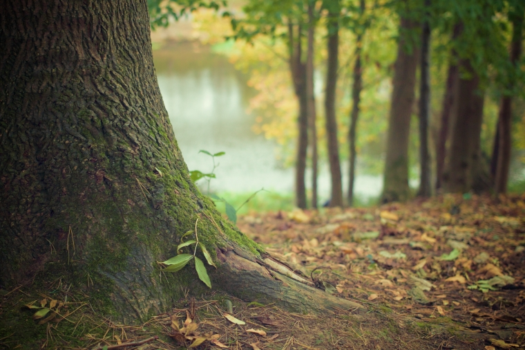 nature-forest-moss-leaves
